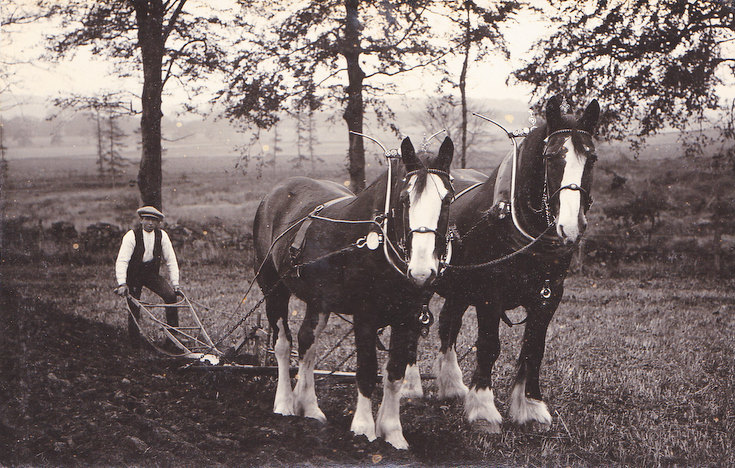 Plooin' wi a pair o' horses