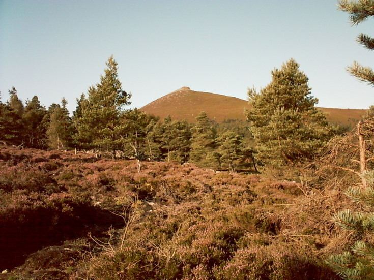 Bennachie from near Muirtown