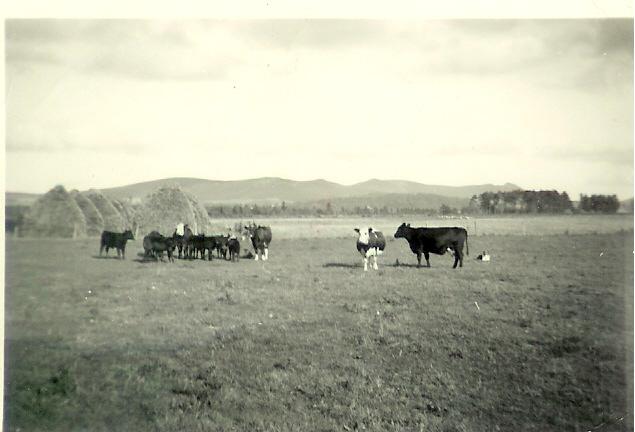 Howe of Alford
