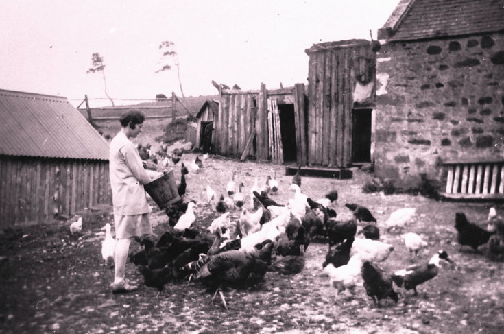 Feeding the poultry