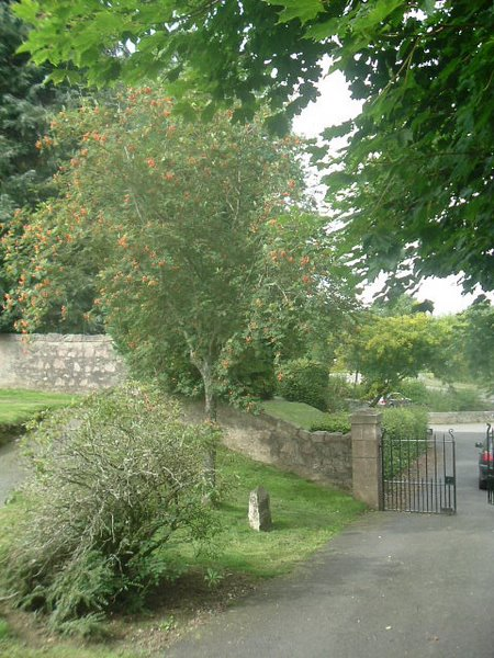Rowan Tree and Commemorative Plaque at Tough kirk