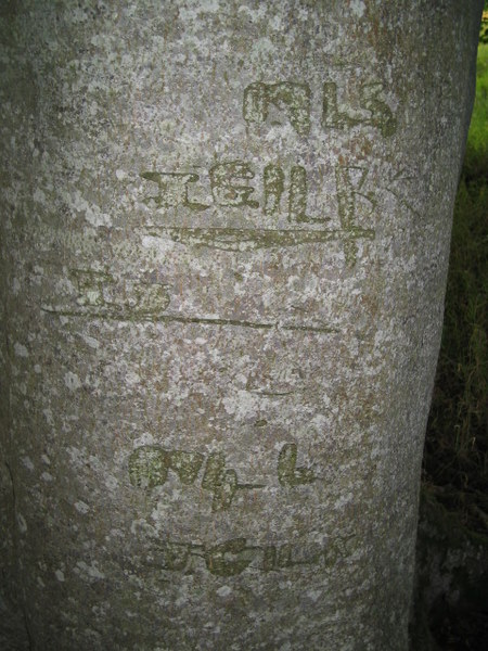 Names and dates carved in trees