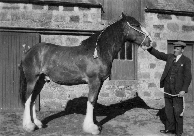 Gordon Reid at Shannoch Farm