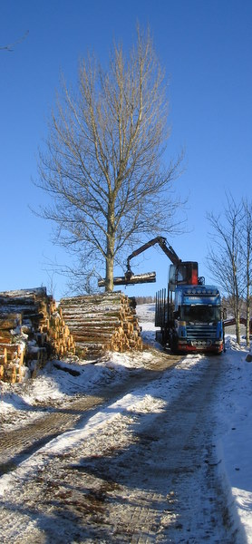Forestry Operations on the Forbes Estate