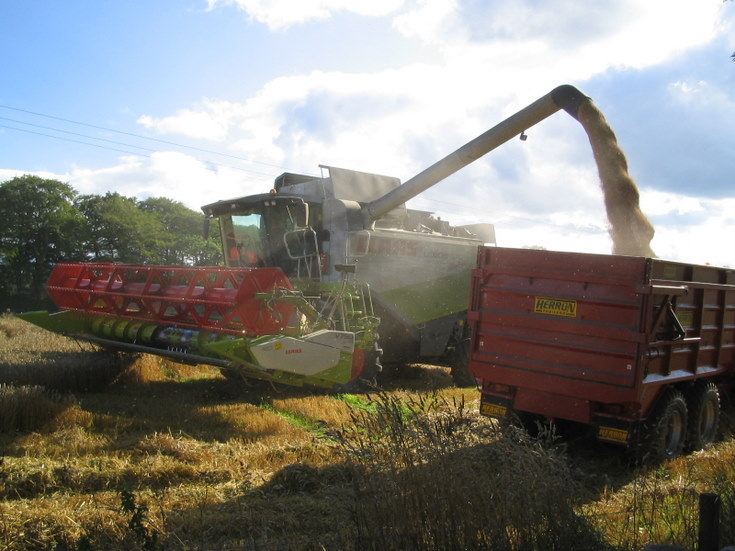 Harvest at Whitehouse