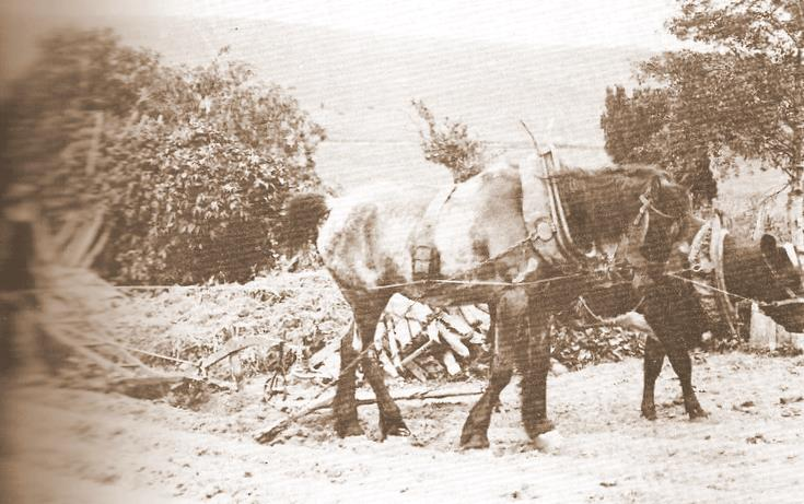 Man Ploughing with Horse and Cow